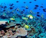 biodiversidad-caribe1