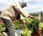 cuba agricultira alimentos